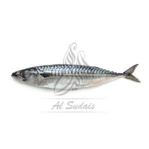 BANGARA (Indian Mackeral)