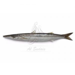Safaid kund (white barracuda)