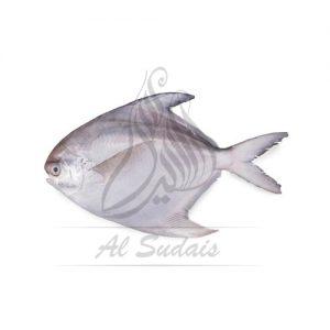Safaid Paplet 4/5 (White Pomfret)